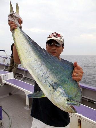 先日、相模湾でシイラ釣り上げました!(変換後))