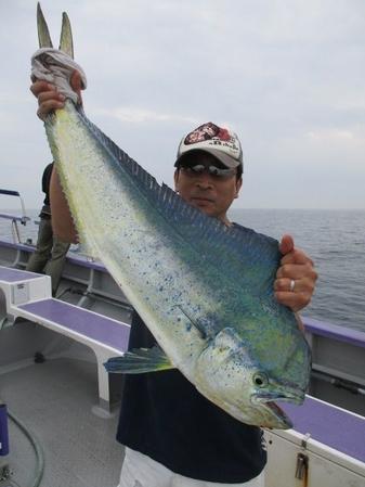 先日、相模湾でシイラ釣り上げました!(変換前)