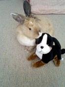 ウサギ!(変換後))