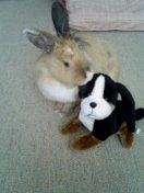 ウサギ!(変換前)
